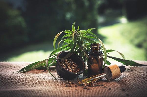 pestki marihuany tanio